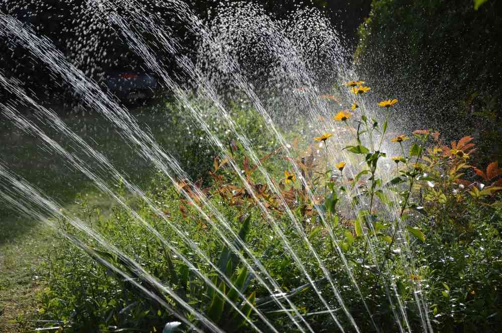 Jak na správné zavlažování zahrady
